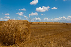 Field Hay Bales Stock Image
