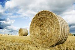 field of hay bales Stock Photo