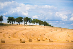 Field with hay bales Royalty Free Stock Photography