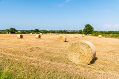 Field with hay bales after harvest in summer royalty free stock images