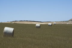 Field Hay Bales, Kings Beach, Fleurieu Peninsula, South Australi. Field of large round hay bales in a field situated at Kings Beach, Victor Harbor, Fleurieu Royalty Free Stock Image
