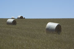 Field Hay Bales, Kings Beach, Fleurieu Peninsula, South Australi. Field of large round hay bales in a field situated at Kings Beach, Victor Harbor, Fleurieu Stock Photos