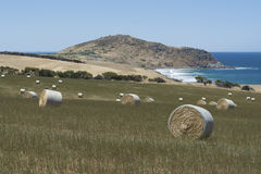 Field Hay Bales, Kings Beach, Fleurieu Peninsula, South Australi. Field of large round hay bales in a field situated at Kings Beach, Victor Harbor, Fleurieu Stock Images