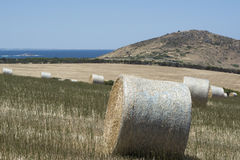 Field Hay Bales, Kings Beach, Fleurieu Peninsula, South Australi. Field of large round hay bales in a field situated at Kings Beach, Victor Harbor, Fleurieu Stock Photography