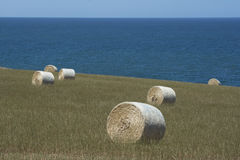 Field Hay Bales and Ocean View at Kings Beach, Fleurieu Peninsul. Field of large round hay bales in a field situated at Kings Beach with the ocean at it`s back Stock Images