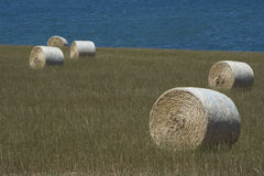 Field Hay Bales and Ocean View at Kings Beach, Fleurieu Peninsul. Field of large round hay bales in a field situated at Kings Beach with the ocean at it`s back Royalty Free Stock Images