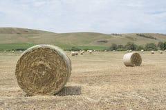 Field of Hay Bales Royalty Free Stock Photos