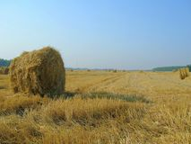 Field of hay bales. Stack of yellow hay field in autumn with blue sky in the early morning royalty free stock images