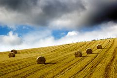 field of hay bales under dark rainy sky Stock Photo