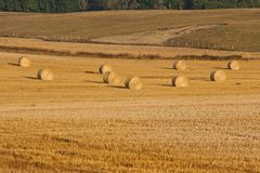 Field with hay ball in Sweden royalty free stock photo