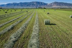 Field of Hay Being Harvested Royalty Free Stock Photography