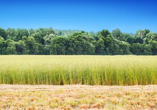 Field of hay and grass Royalty Free Stock Photography