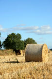 Field with hay rolls Stock Images