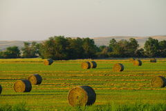 Field of hay rolls Stock Images