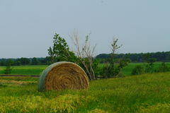 Field of hay rolls Stock Photography