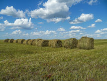 Field and hay rolls Royalty Free Stock Photo
