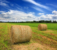 Field with hay rolls at summer time Royalty Free Stock Photography