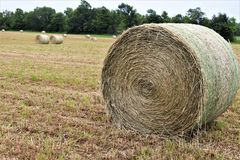 A field of hay royalty free stock photography