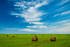 Field with hay stacks Stock Photo