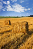 Field of Hay Royalty Free Stock Image