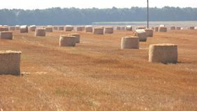 Field with hay stacks. Sunshine and yellow straw. Vasts of motherland. Agriculture progress requires labor stock video