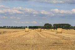 A field with hay and straw bales. A big field with lots of yellow straw bales in holland stock photo