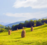 Field with haystack Stock Photography