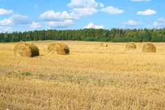 Field with haystacks Stock Images