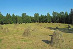 Field with haystacks and forest in the background, rural landscape, Sweden stock images