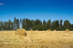 Field with haystacks and green trees Stock Image
