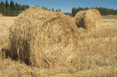 Field with haystacks and green trees Stock Photos