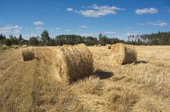 Field with haystacks and green trees Stock Images