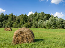 Field with haystacks and green trees Royalty Free Stock Image