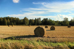 Field with haystacks after the harvest in the village. Stock Image