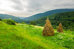 Field with haystacks on hillside Royalty Free Stock Photography