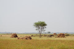 Field with haystacks Royalty Free Stock Photography
