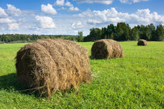 Field with haystacks Stock Image