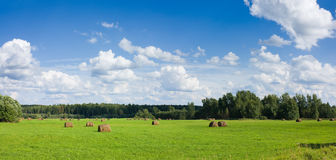 Field with haystacks panoramic view Stock Image