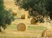 Field with haystacks, rural landscape Royalty Free Stock Photography