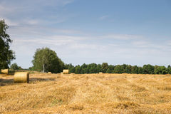 Field haystacks rural view royalty free stock photo