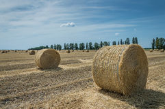 Field with haystacks Royalty Free Stock Images