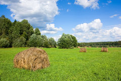 Field with haystacks and trees Royalty Free Stock Images