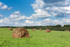 Field with haystacks and trees. Royalty Free Stock Photography