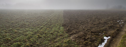 Field in haze Royalty Free Stock Photos