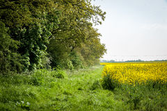 Field headland. Wide headland between arable crop and mature hedge Royalty Free Stock Photos