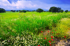 Field with heavy clouds Stock Image