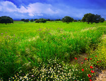 Field with heavy clouds Stock Images