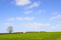 Field and hedgerow in springtime Stock Photography