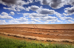 Field with hewed corn and clouds Royalty Free Stock Image
