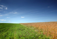 Field with hewed corn and clouds Stock Photo
